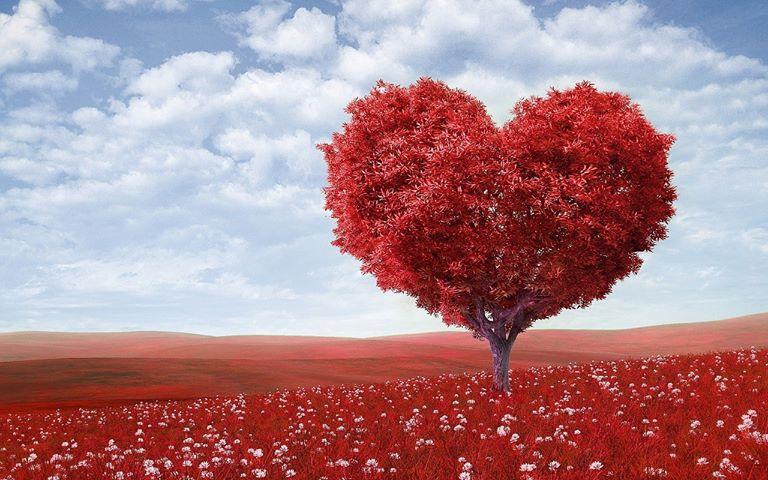 Herzbaum rot